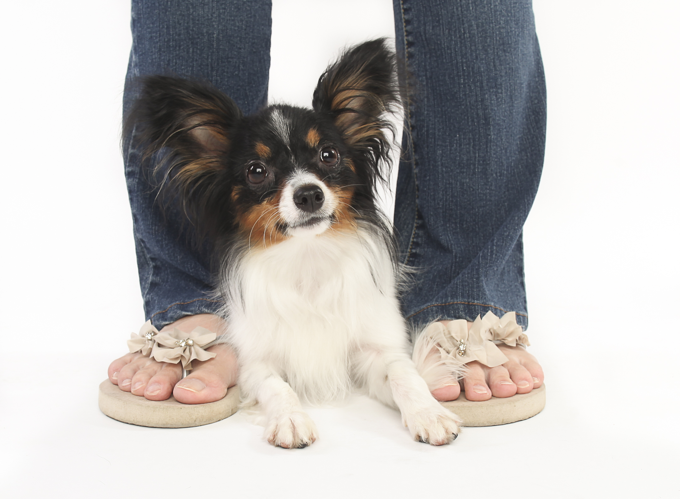 Chewed Slippers Photography-16