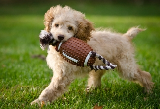 puppy-playing-with-rubber-football